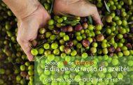 Dia 18 de fevereiro é dia de extração de azeite no lagar de Oliq