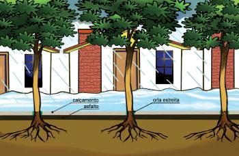 O solo permeável absorve a água da chuva