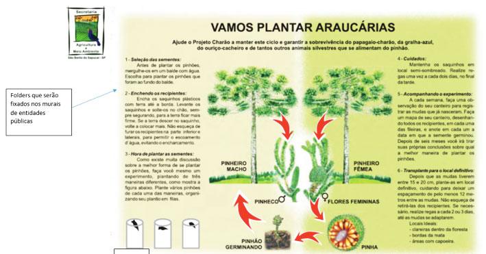vamos-plantar-araucarias
