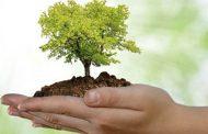 Dia da Árvore - 21 de Setembro